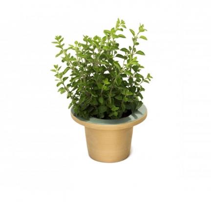 'POFI' COLOR GLAZED TERRACOTTA PLANT POT